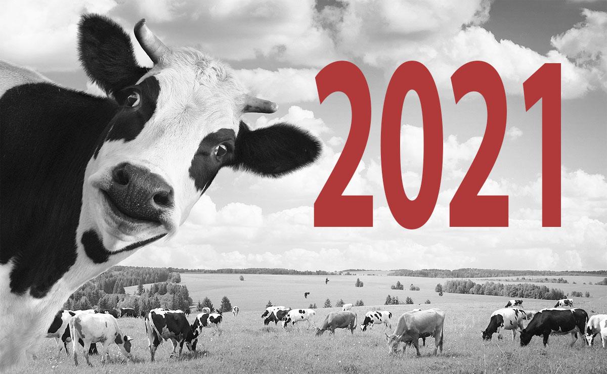 Тренды полиграфического дизайна 2021